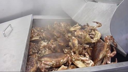 蟹柳是怎么生产出来的?看完机器加工过程,螃蟹被安排的明明白白