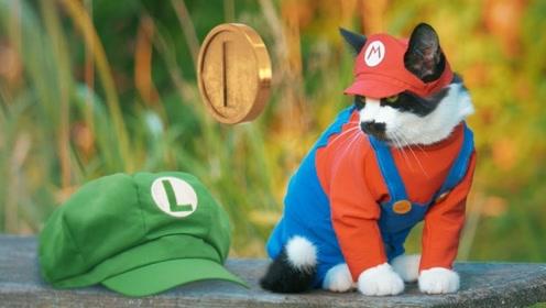 心爱的喵咪公主失踪了,宠物猫翻山越岭来到城堡,却发现救错了!