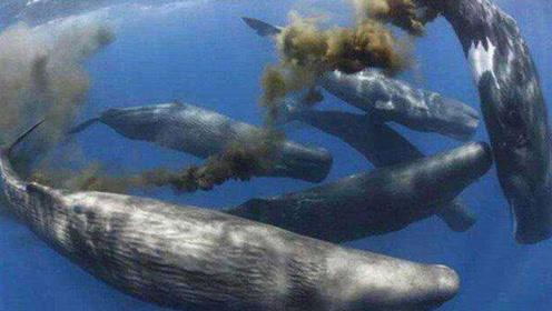 实拍180吨鲸鱼排泄过程,方圆30米暗无天日,摄影师:太酸爽了