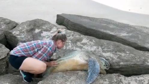 海龟返海途中被卡在岩石缝里,被路过小情侣发现,下一秒超级暖心!
