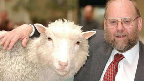 20年前克隆出多莉羊,为何当时不克隆人?看看多莉的下场就知道