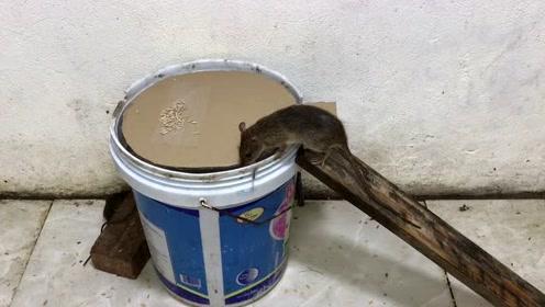 废弃的油桶不要丢,用它来设陷阱,老鼠们有来无回