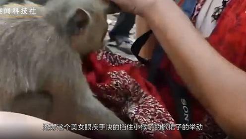 猴子有多调皮?没想到猴子见到美女就搞事情了!镜头拍下全过程!