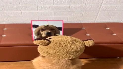 主人在金毛面前放了面镜子,这狗凌乱了,狗:我竟然不是人!