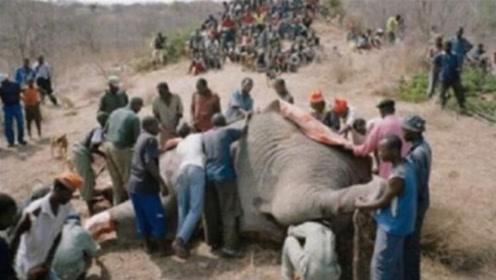 """大象肉粗糙寄生虫还多,为什么非洲人喜欢吃?不愧是""""野蛮民族"""""""