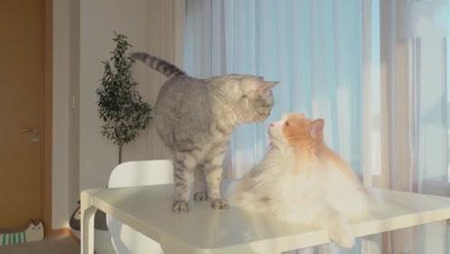 【CreamHeroes】TT猫真的不喜欢DD猫吗?