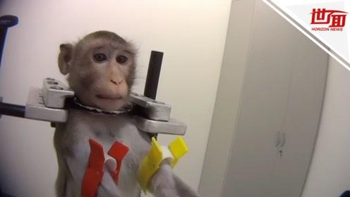 德国实验室被曝残忍对待动物:猴子被锁喉捆绑 猫狗口吐鲜血