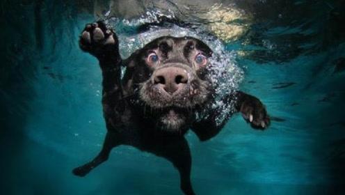 海边看到一只落水狗,小伙正打算去救它,走近一看掉头就走