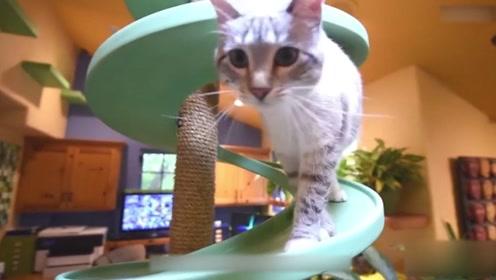 光头大叔怒花21万,打造猫咪梦幻乐园,网友:住久了不会得风湿?