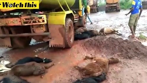 印度闪电一口气打死40多头羊 恐怖现场曝光