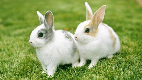 生肖兔的大贵人,属兔人身边如有这几个生肖的人,运势飞涨!