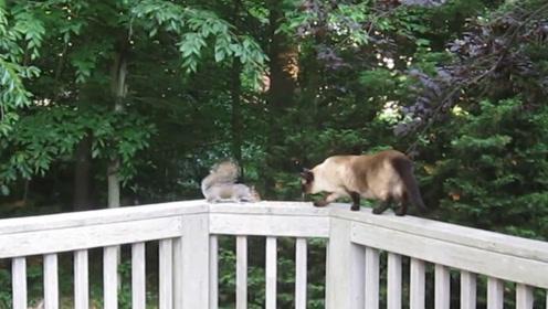 松鼠怕猫咪,但在松鼠和猫咪之间放上食物后,松鼠:我先吃为敬!