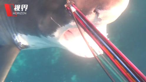 实拍澳大利亚潜水员遭遇鲨鱼袭击 手持鱼叉惊险搏斗10分钟后逃生