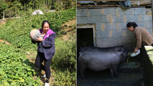 70后女子种地养蚕养猪不怕累,精心照顾重病老公和盲婆婆