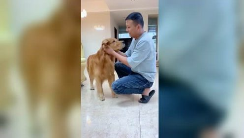 这就是养狗前后的区别,别说你是爱狗人士,很多人都这样了吧