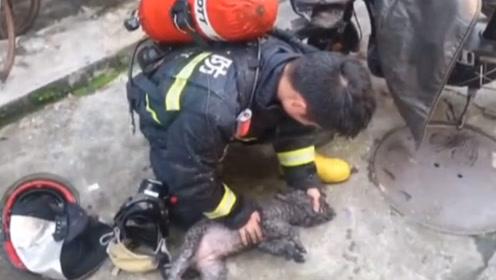 """""""先救我的狗""""!家中着火主人哭喊先救狗,多次想冲进火场被拦"""