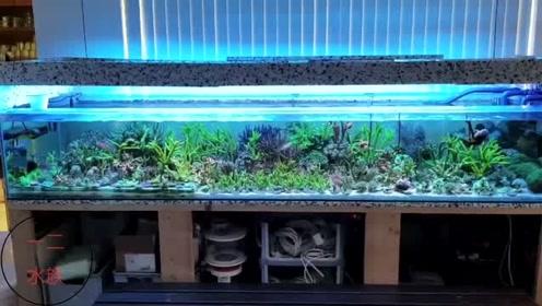 3米长海水鱼缸,看清饲养的珊瑚之后,我只能用眼馋来形容