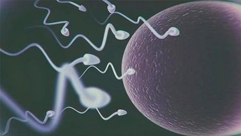 精子进入女性体内后,会经历哪些事情?今天总算知道了