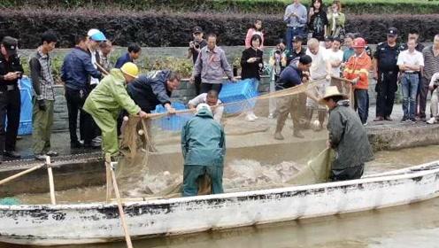 我柠了!高校捞600斤鱼请师生免费吃,学生:终于成了别人家大学