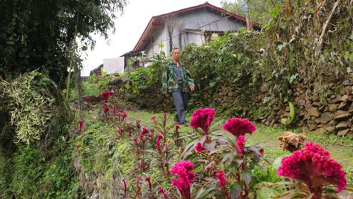 大山里的单身男子,土坯房塌了盖砖瓦房,通往家的小路上种满花