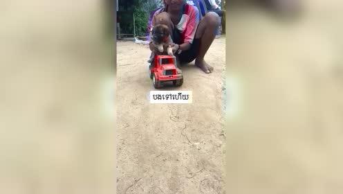 小狗子的驾车技术真好