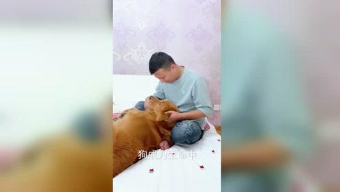 别说养狗很容易,有多少人能做到这样,看着有点与众不同