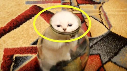 淘气小猫钻进玻璃瓶,谁知出不来了,这可怎么办才好?