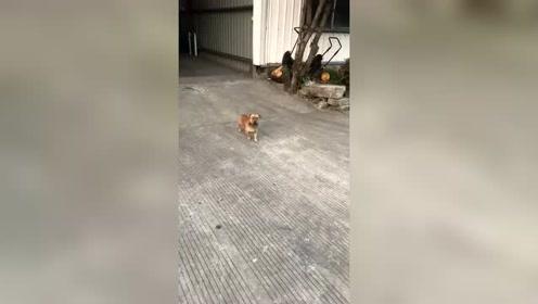 眉清目秀的狗子!狗子:我太难了!