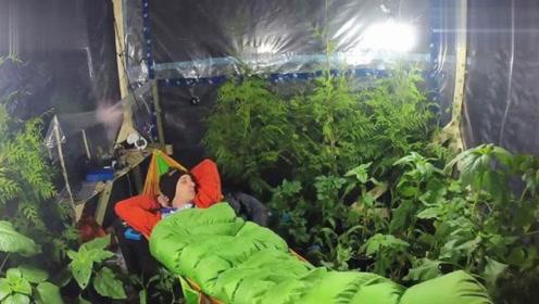 """200棵植物所产生的氧气,能让一个人""""呼吸""""多久?答案令人脊背发凉!"""