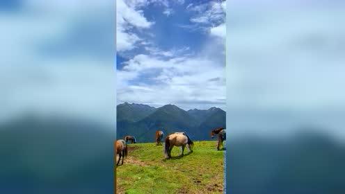 川西给不了你繁华的闹市,但这大山和草地,却别有一番感受