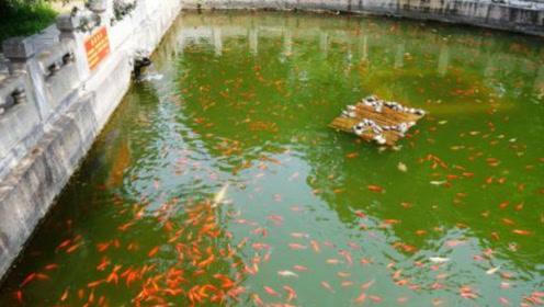 寺庙放生池很小,装满后该怎么办?处理方式让人意想不到!