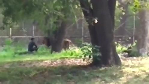 狮口脱险!印度男子不顾一切跳入狮栏挑衅狮子 毫发无损被救出