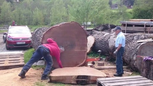 农民花20万买下一棵千年古树,将大树锯开后,这钱花得不冤枉!