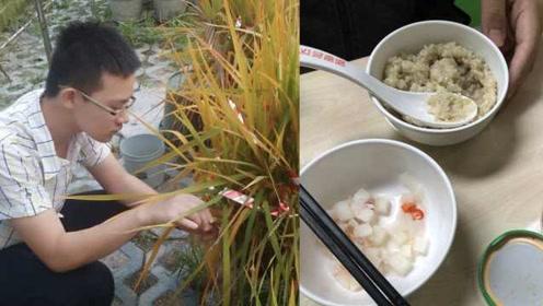 大2男生历经5个月,成功种出杂交水稻,网友称袁老后继有人