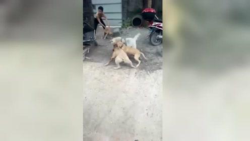 狗子:求求你们不要再打啦