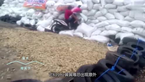 俩小伙骑摩托炸街,不料给油过猛,下秒粘墙上抠不下来!