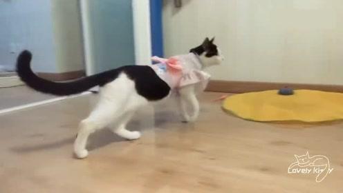 猫咪被迫营业,不仅穿女装还要装可爱:唉,猫生艰难啊!