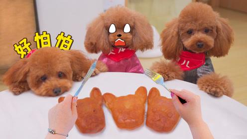 亲眼目睹铲屎官把狗狗蛋糕切开吃掉,3只怂泰迪吓懵了:快跑呀!