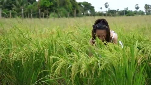 柬埔寨的农村少女很漂亮,也很勤劳,每天在田野里抓鱼养活家人