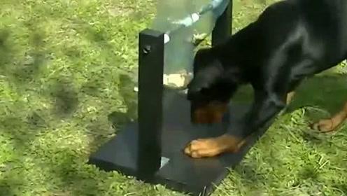 主人用矿泉水瓶自制自动喂食器,给狗子忙活够呛,效果还不错