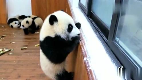 不要崇拜哥,这些是日常操作,我可是会武功的熊猫,典型帅不过三秒