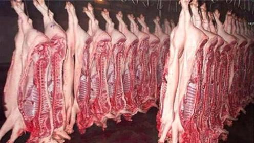 """病死的猪都被做成火腿肠了?养猪场老板透露""""实情"""",很多人都猜错了"""