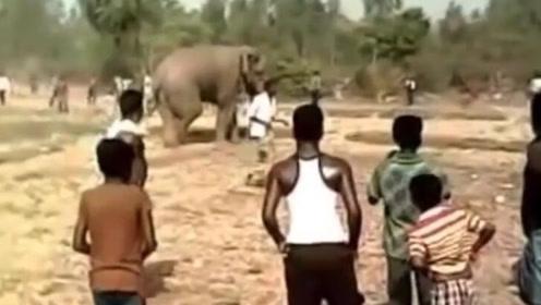 男子挑衅扔东西大象 差点被愤怒大象踩死