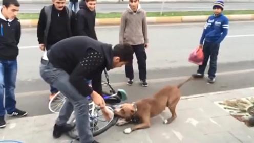狗狗死咬自行车胎不放,车主割开车胎,里面到底藏着什么秘密?