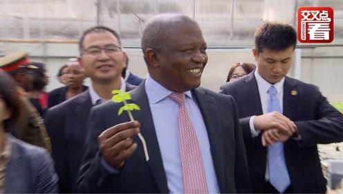 """南非副总统访华体验采摘""""农家乐"""" 当场试吃芹菜生菜不停点赞!"""