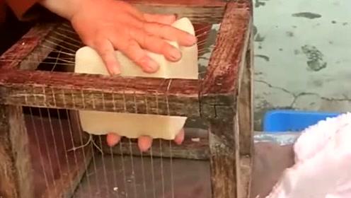 这才是真正的米豆腐,这一幕让我开眼了,大妈的手法相当完美