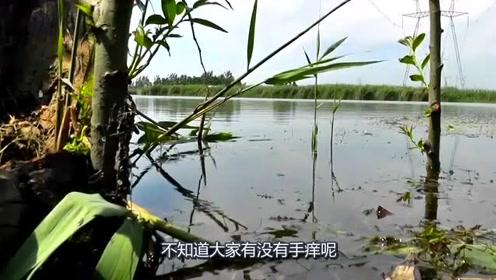 钓鱼:钓鱼会上瘾,看钓鱼视频是会手痒的