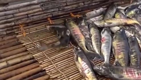 """日本""""变态""""捕鱼方式,整条河的鱼都能被捉光,当地人直接下手捡!"""