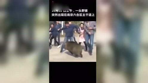 野猪闯进门窗厂横冲直撞,众员工组织wei'du