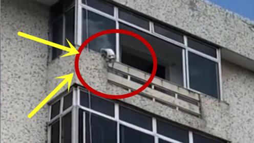 狗狗吊在楼顶,让人看着心惊,真是太吓人了!